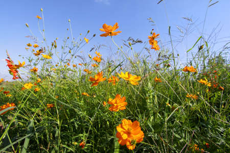 perennial plant: Flower garden Stock Photo