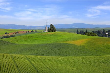 hiils: Rolling hills with wheat fields