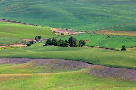 palouse: Palouse landscape Stock Photo