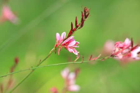 Tiny pink flowers against green background