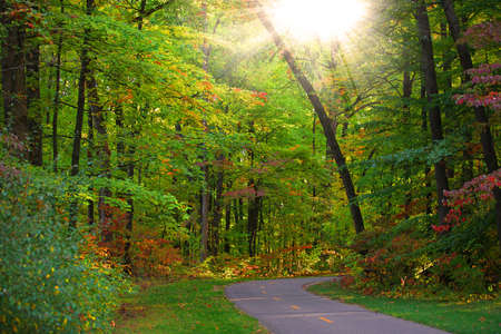 drive way: Tree covered drive way in early autumn time Stock Photo