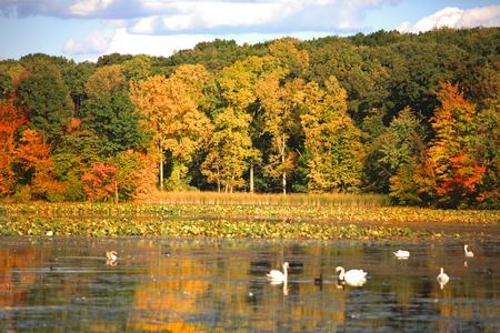 pato: Árboles coloridos del otoño por el lago Foto de archivo