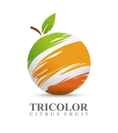 Vector illustration of citrus fruit concept Vettoriali