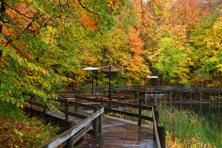 walk board: Colorful autumn trees by the board walk Stock Photo
