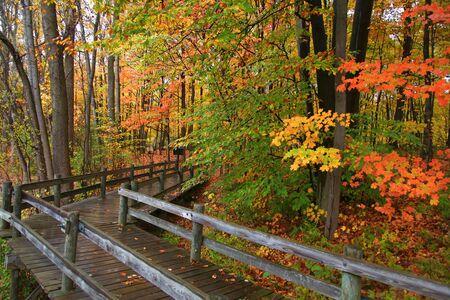 walk board: Autumn board walk