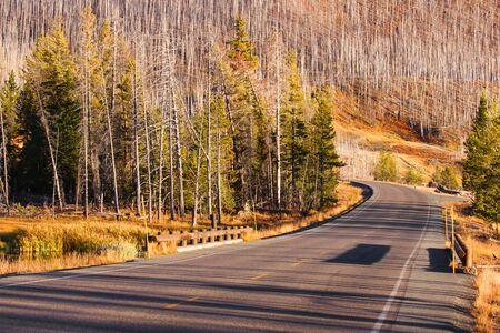 cody: Drive through burnt trees