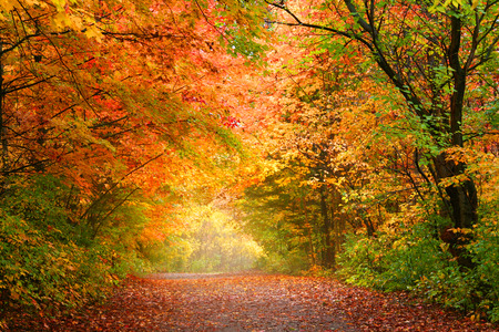 allegheny: Bright autumn trees in Allegheny national forest Stock Photo