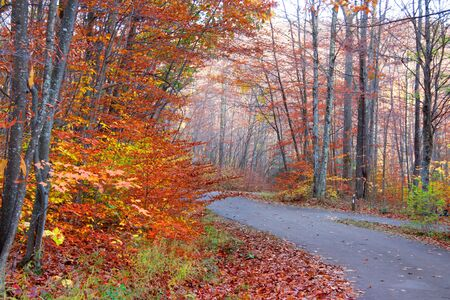 west virginia trees: Rural road through autumn trees and fog