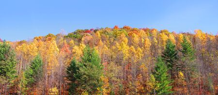 allegheny: Panoramic view of autumn trees