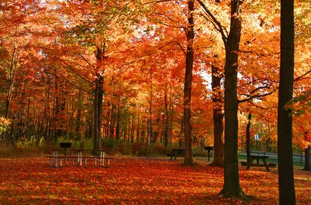 allegheny: Fall foliage in park in Pennsylvania