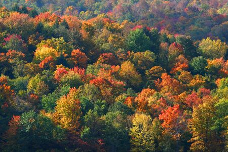 allegheny: Colorful autumn trees in dense Allegheny national forest