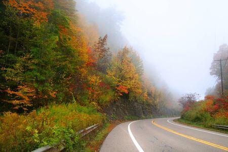 drive through: Scenic drive through autumn trees
