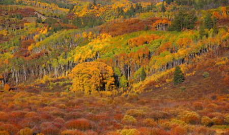 ouray: Autumn on mountain slopes