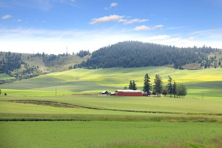 palouse: Palouse landscape Stock Photo