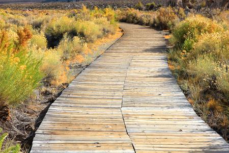 sierras: Board walk through plants near Mono lake