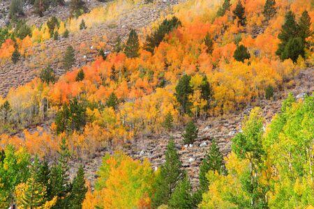 autumn colour: Autumn in Sierra Nevada mountains Stock Photo