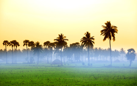 llanura: Paddy campos y niebla de la mañana en el estado de Andhra Pradesh en la India