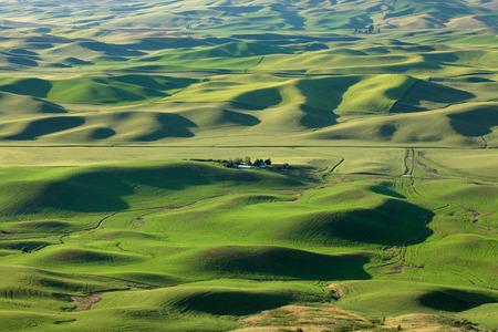butte: View of wheat fields from Steptoe butte in Palouse,Washington