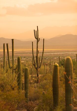 red mountain open space: Saguaro national park in Sonoran desert