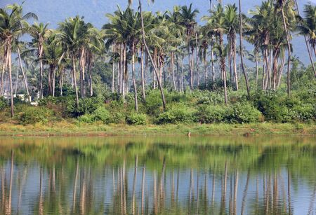 andhra: Coconut trees and reflection in southern India state Andhra pradesh