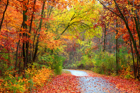 Beautiful alley in colorful autumn time 写真素材