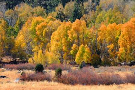 sierra nevada: Fall foliage in Sierra mountains, California