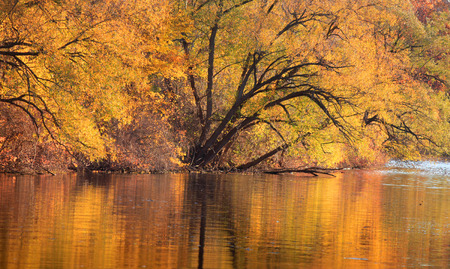 autumn colour: Colorful autumn tree reflections in the lake
