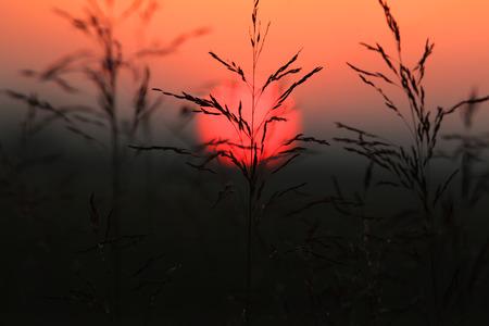 rise fall: Tall grass against sun set Stock Photo