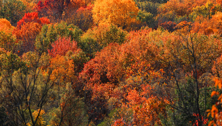 michigan: Fall foliage in Michigan state Stock Photo