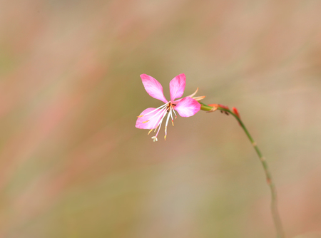 Single tiny pink flower on the plant Stock Photo