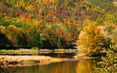 Beautiful autumn landscape in Allegheny forest.