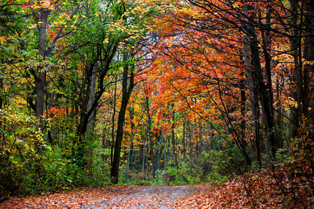 curvature: Beautiful alley in colorful autumn time Stock Photo