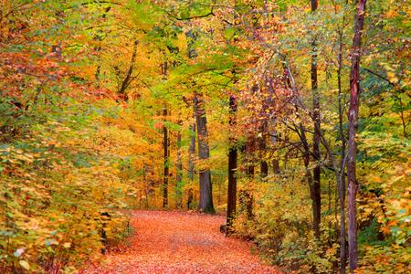 curvature: Trail through bright autumn trees