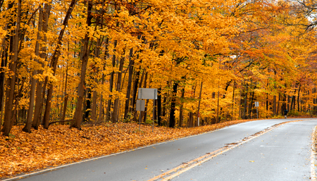 Golden fall trees by the road in Pennsylvania