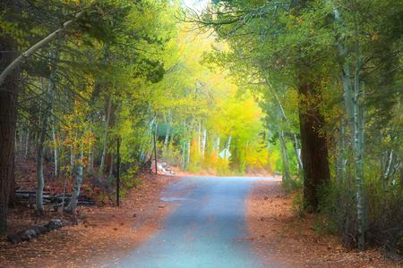 drive through: Beautiful drive through aspen trees
