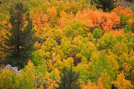 sierra nevada: Fall foliage in Sierra Nevada mountains
