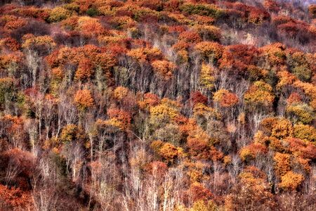 allegheny: Fall foliage in West Virginia mountains