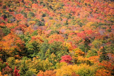 Fall foliage on Mount Mansfield near Stowe in Vermont