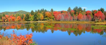 Autumn tree reflection in Crampton pond