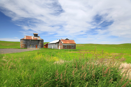 Old barns in the middle of wheat fields