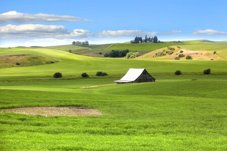 Barn in the middle of rolling hills of wheat fields