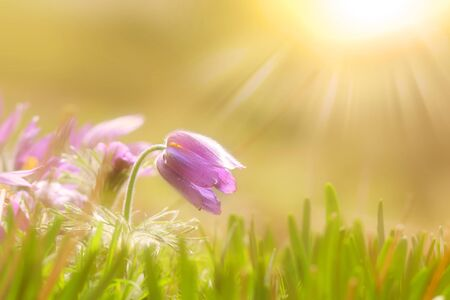 days gone by: Wild flowers with sun flare Stock Photo