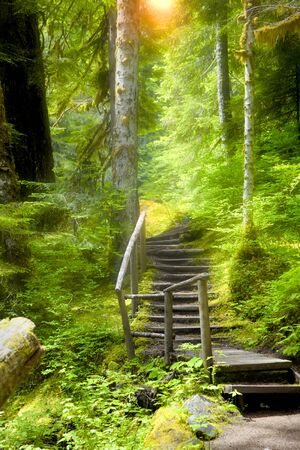 Walking trail in the forest with sun rays Stock Photo
