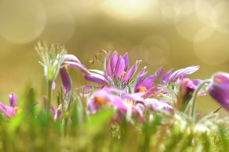 days gone by: Wild flowers in the Meadow Stock Photo