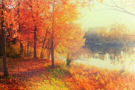 Fall foliage by the lake