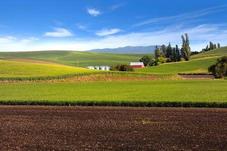 Rolling hills of wheat fields in Palouse Stockfoto