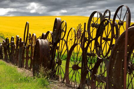 Fence of wheel rims against rapeseed