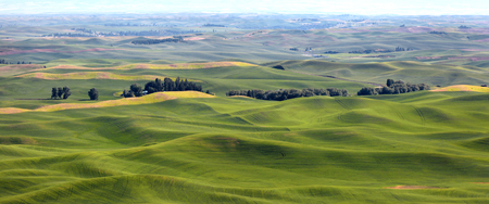 Panoramic view of Rolling hills in Palouse Washington state