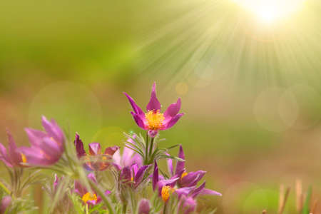 Wild flowers with sun flare Stock Photo