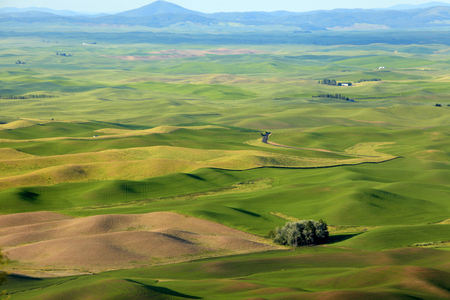 Rolling hills in Washington state from Steptoe butte